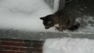 Cautious Cat's First Encounter with Snow