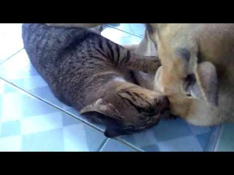 ภาพน่ารักๆแมวกับสุนัข