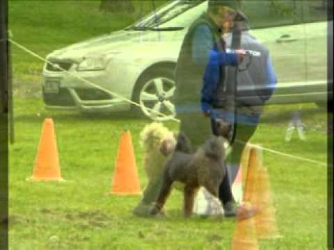 Berwick Obedience Dog Club 32 Birthday Members Comp Oct 2012