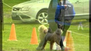 Berwick Obedience Dog Club 32 Birthday Members Comp Oct 2012