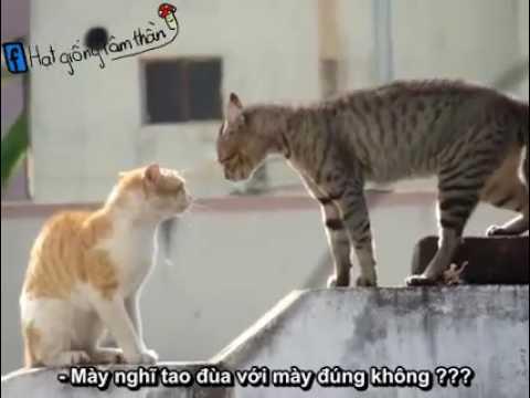 2 con đũy mèo đánh nhau vi cái lí do gì thì chỉ có 2 bọn nó biết (người méo  biết)