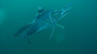 spearfishing sydney australia part 10