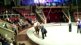 Прикол пьяный ужас на сцене цирка сверху на лошади разбился голая правда