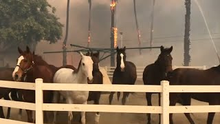 Horses flee San Diego fires