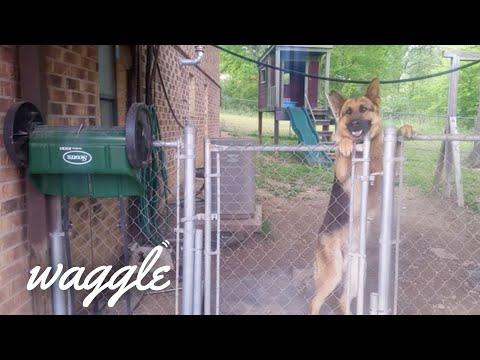 Pet Greetings | Cute Excited Pet Videos
