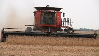 steve sauder farms soybean harvest case ih 8120 combine on 10 1 2014