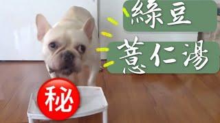 狗狗夏季消暑料理,方便又簡單!綠豆薏仁湯*法鬥|寵物|汪星人|
