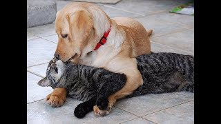 Extremely Funny Cats and Dogs Video Compilation!  -- DMG Showtime