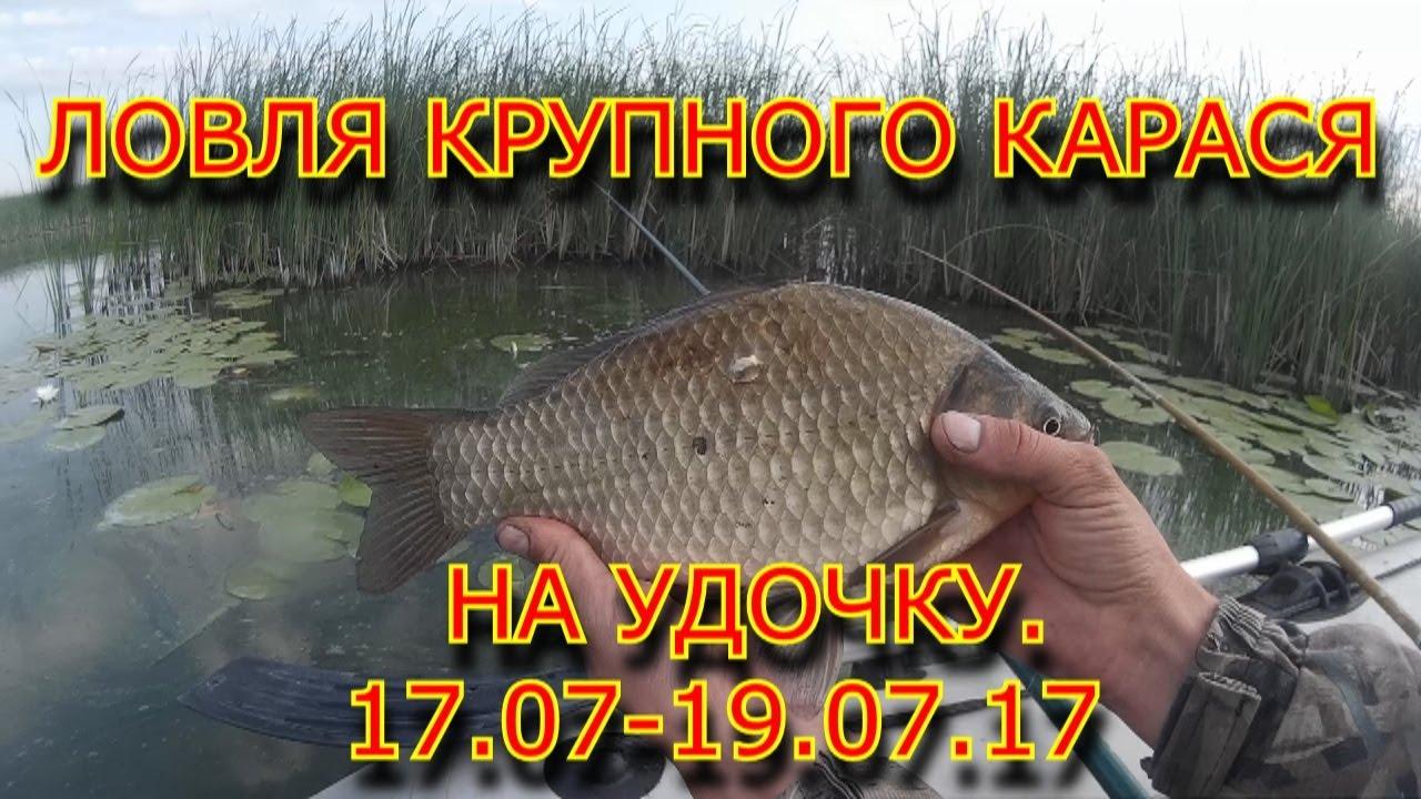 ловля карася в ярославской области видео