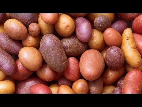 Farmers in Ghana find sweet spot in sweet potato
