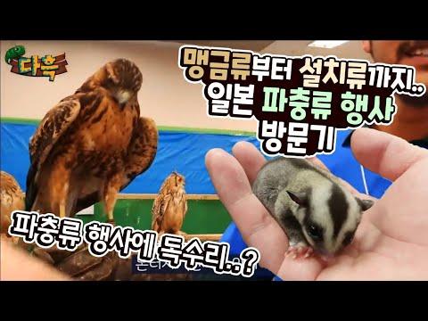 독수리까지 ㄷㄷ..... 무엇이든 전부 분양하는 일본의 파충류행사에 가봤습니다. 이정도로 많을줄은 몰랐네요