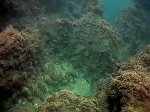 Underwater Atlantic ocean 2