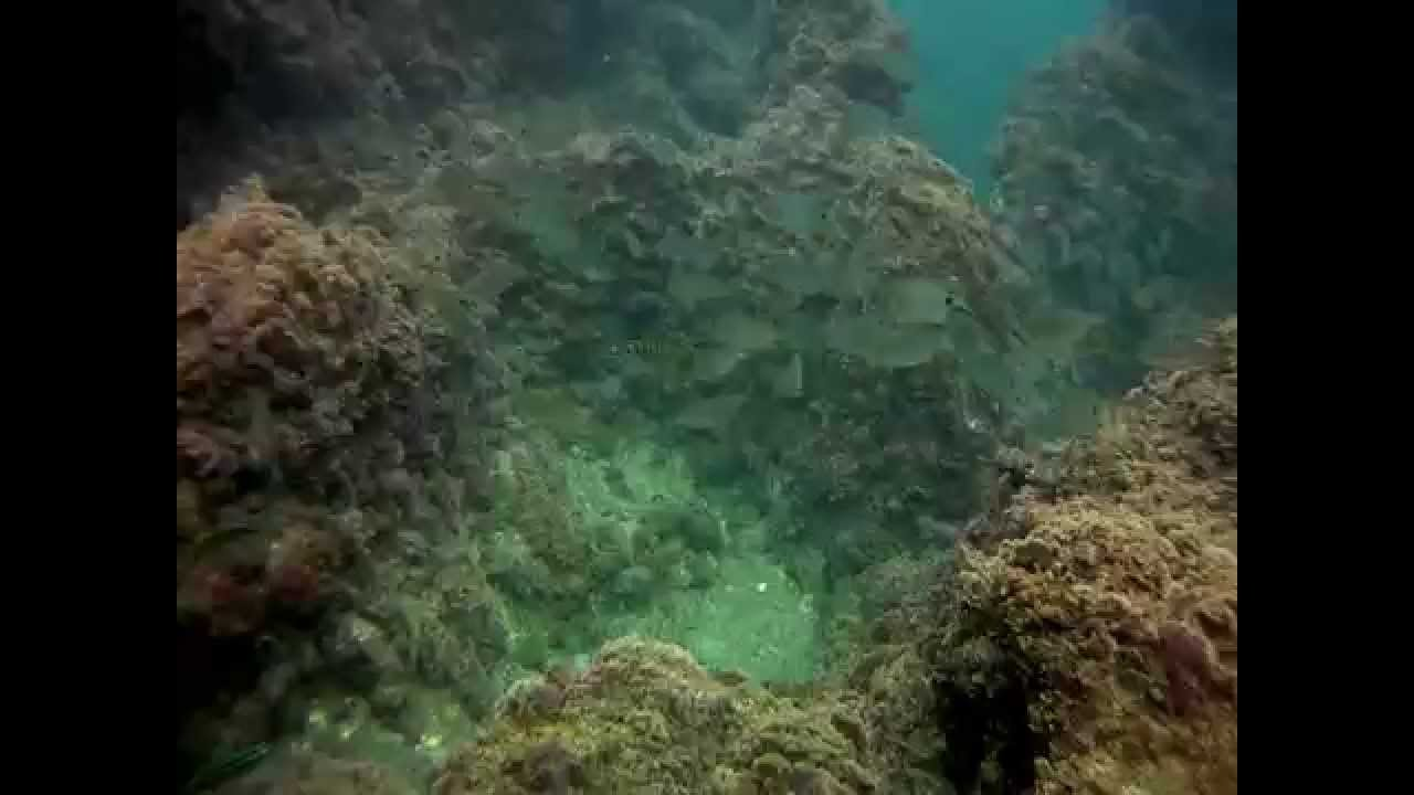 Underwater Atlantic ocean 2 - YouTube