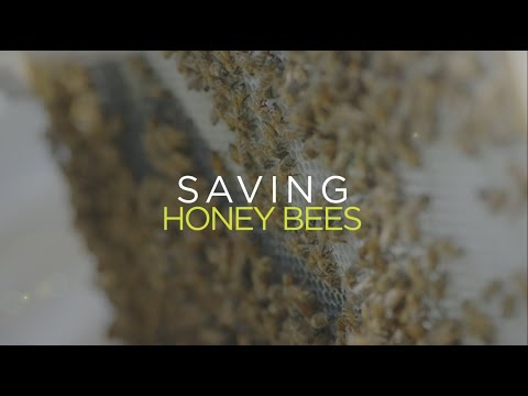 Eliminating the Honey Bee's Biggest Enemy - YouTube