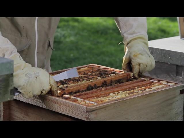 Thymovar biologische varroabestrijding
