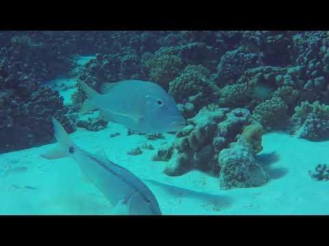 Diving Fakarava in the Tuamotus, French Polynesia