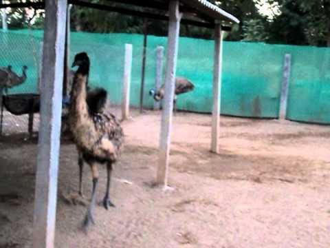 Emu Bird Farming Business Plan In Gujarat