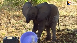 Baby Elephant Who Lost His Family Gets Help
