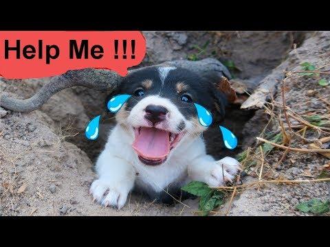 Giải Cứu Chó Con Thoát Chết Trong Bẫy Chết Người .Bí Mật Kinh Hoàng Ở Bẫy Tử Thần.Dogs VS Scorpions
