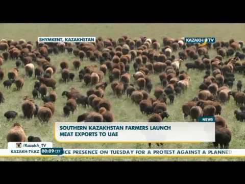 Southern Kazakhstan farmers launch meat exports to UAE - Kazakh TV