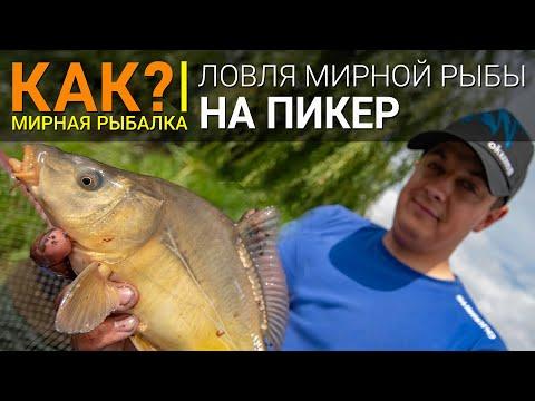 КАК? Ловля белой рыбы на пикер.