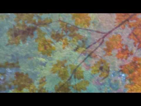 Imagined trip in Autumn - dreampop / alternative / indiepop compilation Mp3