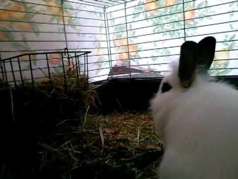 Woran erkenne ich ob mein Kaninchen trächtig ist?