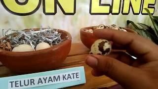 Macam Macam Telur Yang Sering Di Kosumsi Masyarakat Indonesia