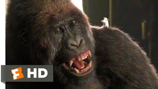 Dolittle (2020) - Gorilla Chess Scene (1/10) | Movieclips Thumb