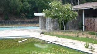 Piscina Parque Alvito P1050881.MOV