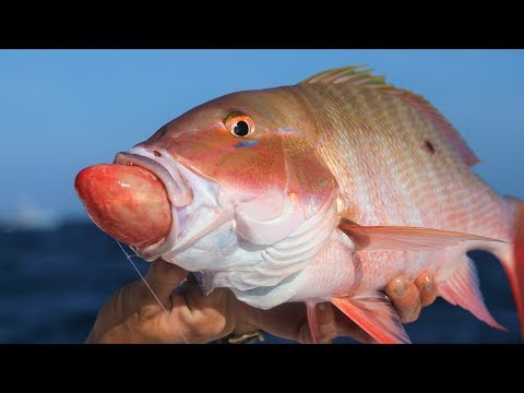 Why Is This Fish THROWING UP It's STOMACH? Florida Deep Sea Fishing