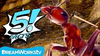 5 Facts About ANTS, Man | 5 FACTS