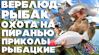 КАРАВАЙTV / ВЕРБЛЮД-РЫБАК / ОХОТА НА ПИРАНЬЮ / ПРИКОЛЫ РЫБАЦКИЕ