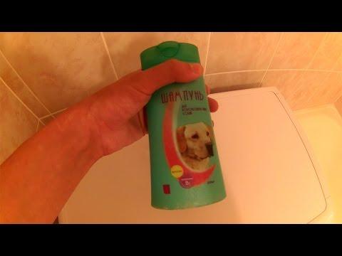 Как часто можно мыть лабрадора шампунем