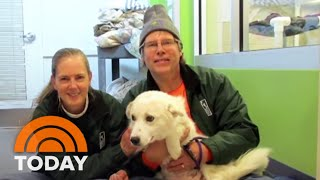 Meet The Vets Using Cutting-Edge Technology To Save Dogs With Heart Disease | TODAY