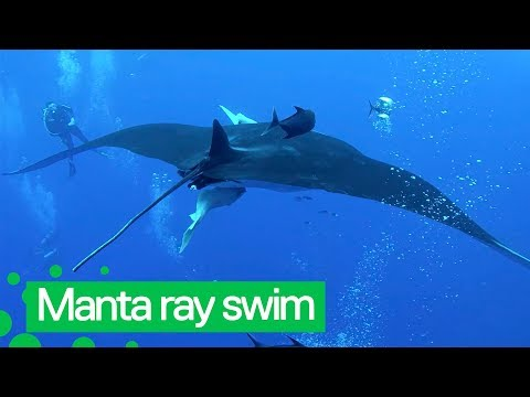 Diver Swims With Huge Manta Ray Off Mexico Coast