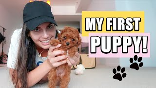 Vlog: My FIRST DOG ! First 24 hours with a PUPPY