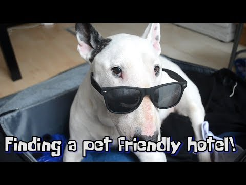How To Find A PET FRIENDLY HOTEL!