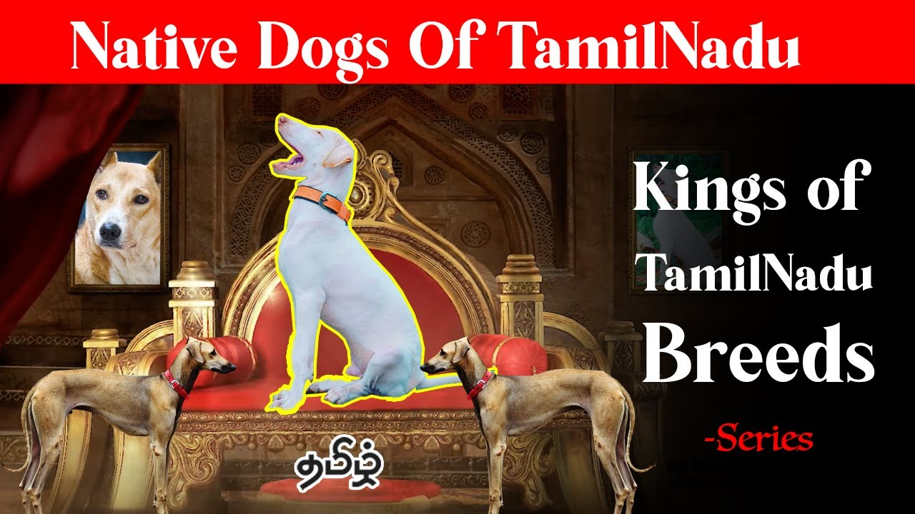 Native Dog Breeds Special  series | Tamil
