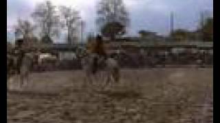CHEVAL DE BATAILLE duel de hussards