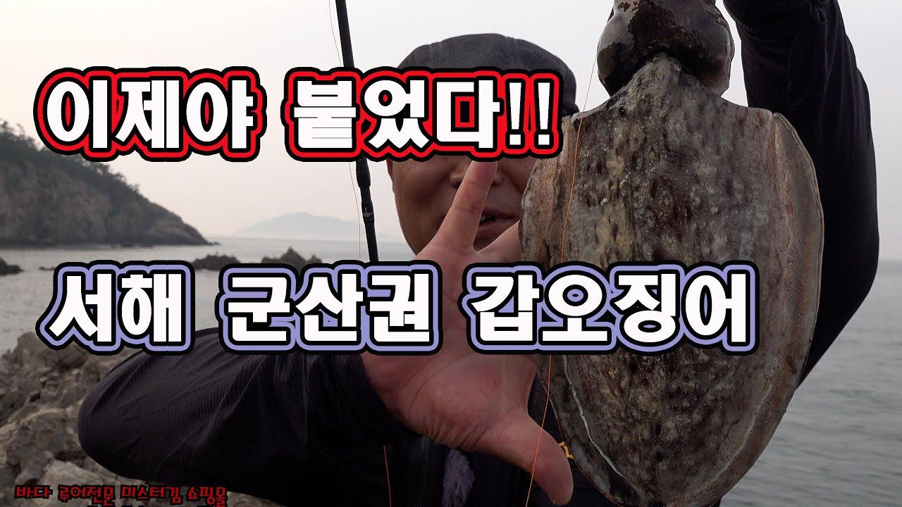 2021년6월2일, 이제 군산권도 갑오징어가 붙었다. 갑오징어 워킹탐사 두마리 랜딩 성공!!
