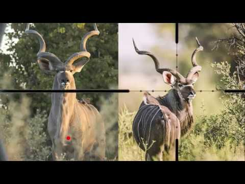 Shot Placement - Kudu