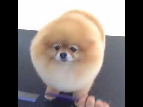 Cute dog haircut