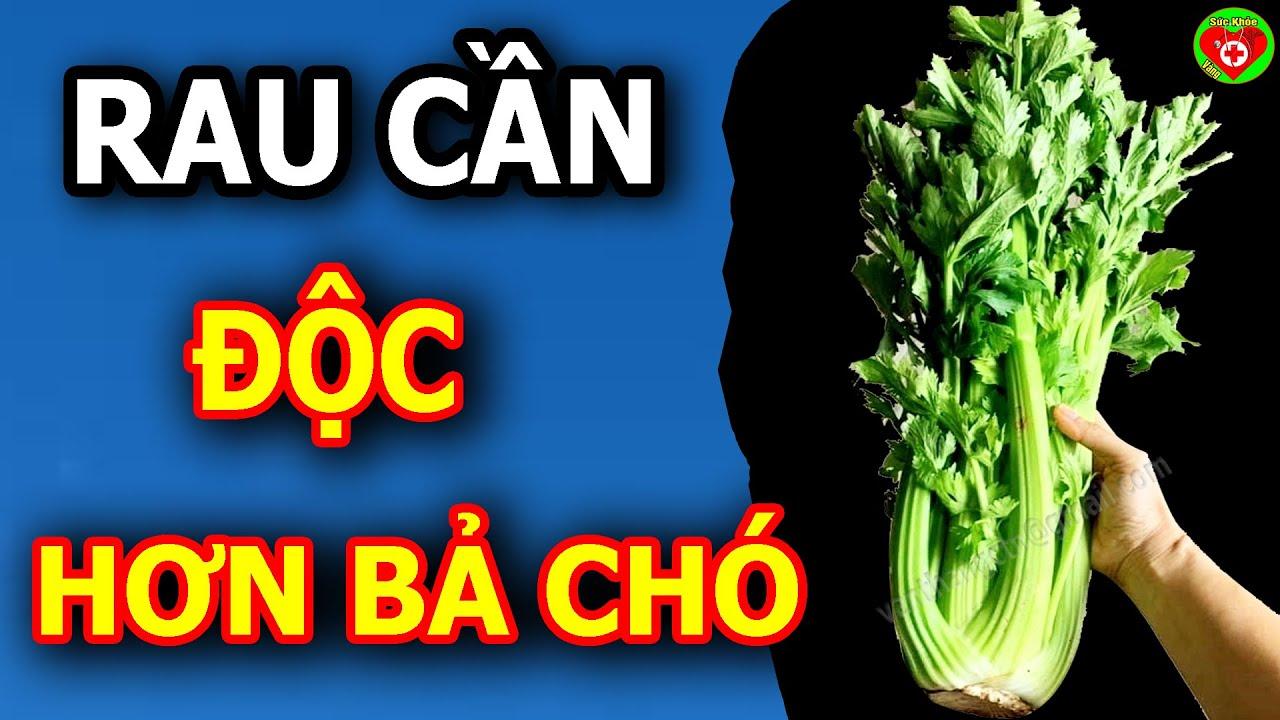 Download TÁC Hại Rau CẦN TÂY,  Dùng Sai Cách Độc Như THUỐC CHUỘT