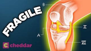 Why The Human Knee Is A Design Disaster - Cheddar Explores