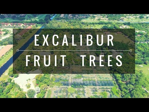 THIS PLACE IS HUGE! (Excalibur Tropical Fruit Tree Nursery.)