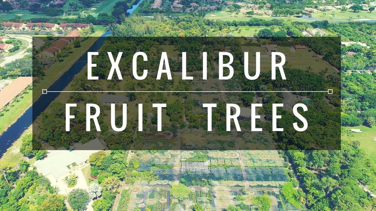 Excalibur Tropical Fruit Tree Nursery
