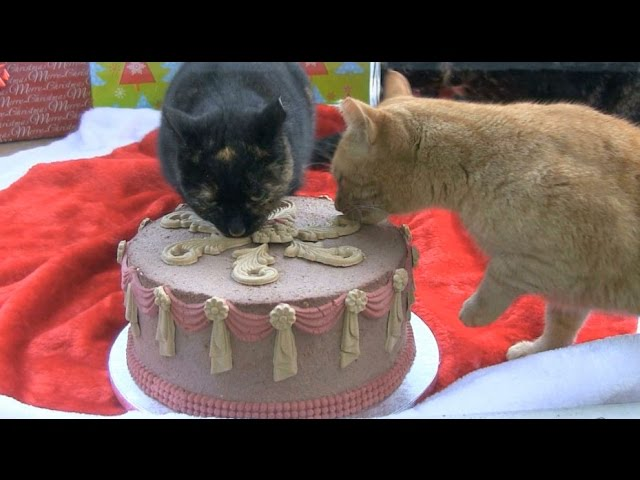 Cats Eating Christmas Cake