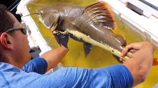 massive-fish-rescue-for-my-aquarium