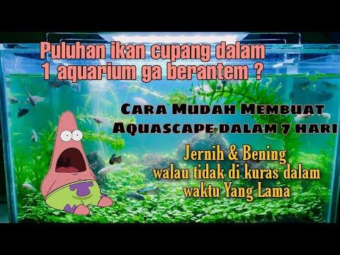 cara-membuat-aquascape-ikan-cupang-selama-7-hari